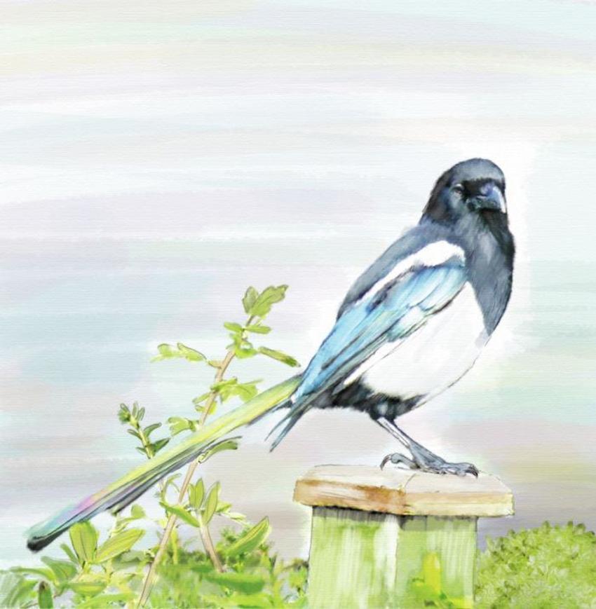 09 Slim Birds 2016