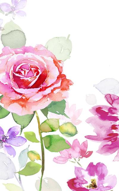 8x5-ag-valantines-rose