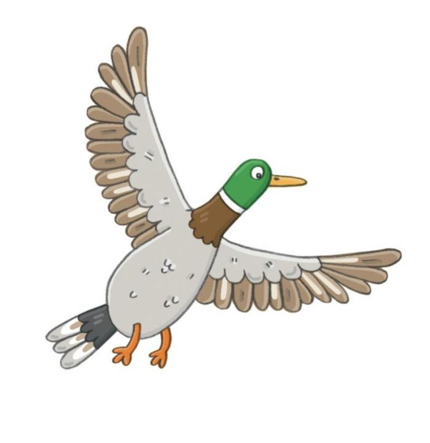 Flying Duck.jpg
