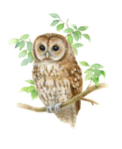 la-owl-aw-am-jpg