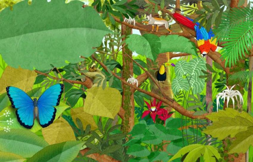 rainforest sample 2  .jpg