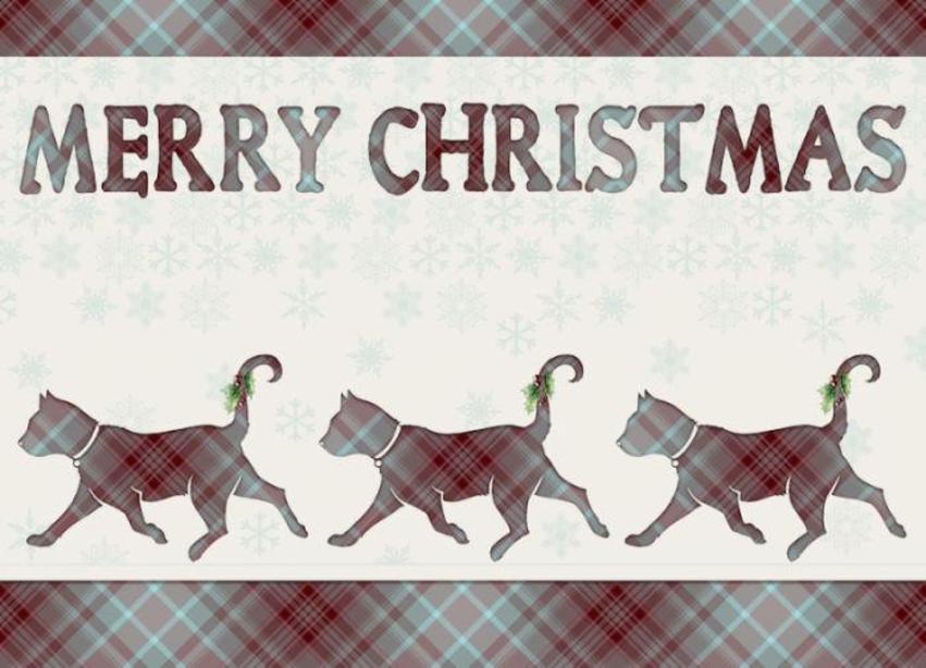 Cat Tartan Xmas.jpg