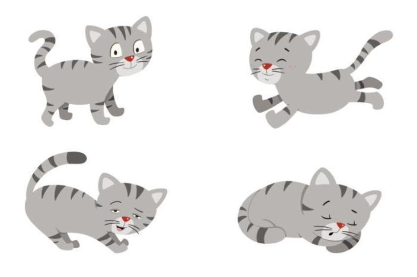 baby cat.jpg