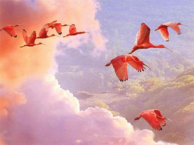 scarlet-ibis-cover-awnn-jpg