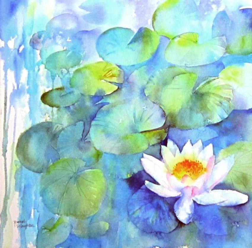 Waterlily 2.jpg