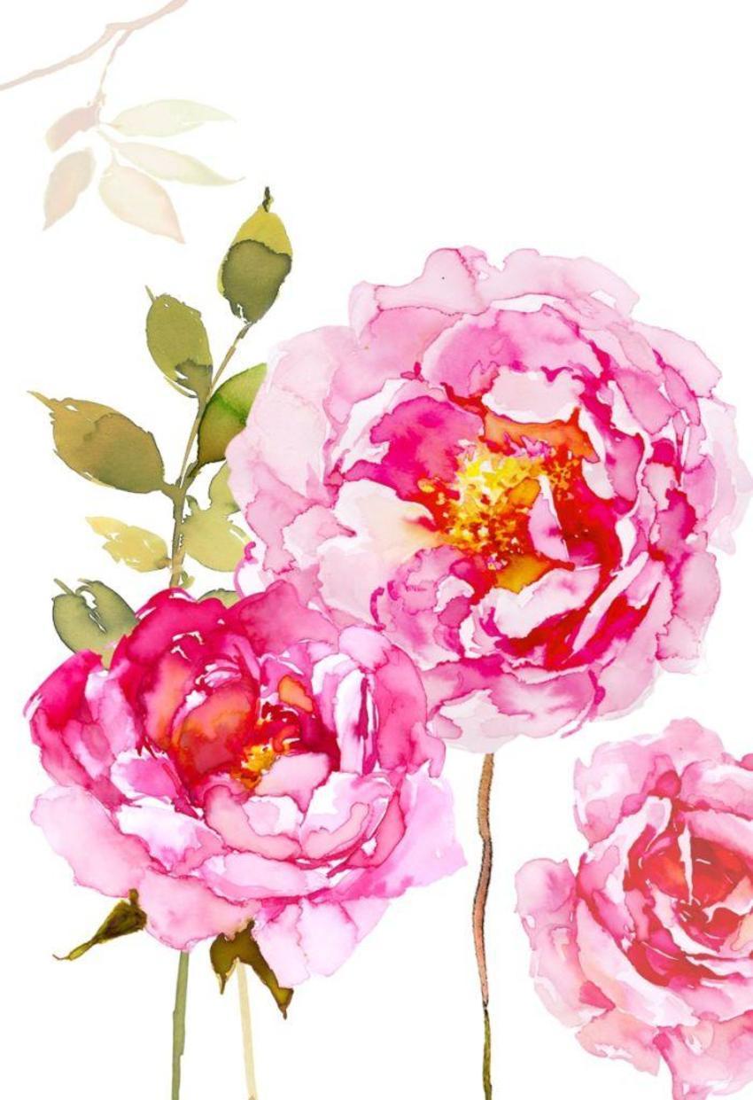ROSE & Daisys Design  psd.psd