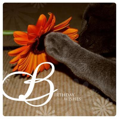 jasperella-flower-jpg