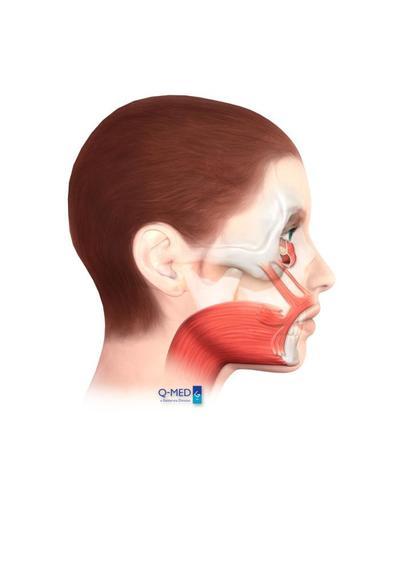 true-retaining-ligaments-jpg