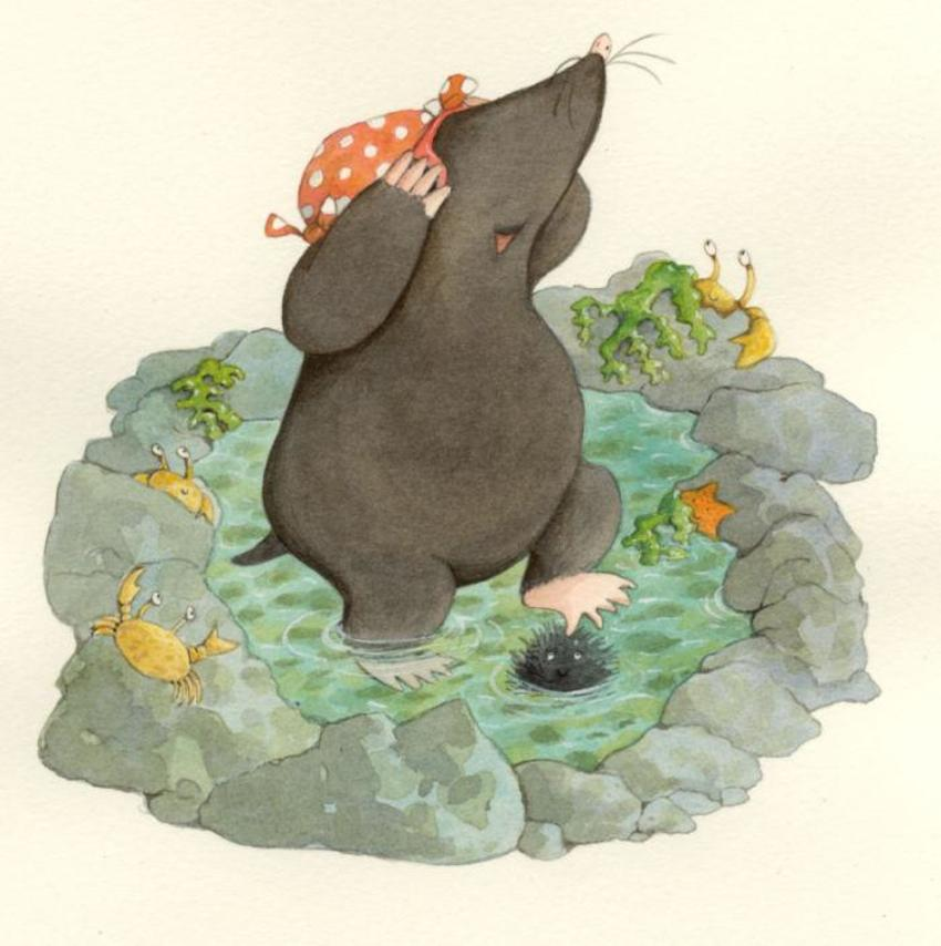 mole in rock pool.jpg