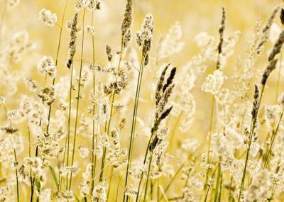 grasses-001-jpg