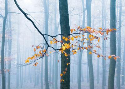 forest-autumn-blue-001-jpg