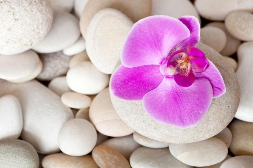 Orchidee_Stein_10_10_001.jpg