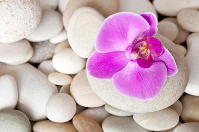 orchidee-stein-10-10-001-jpg