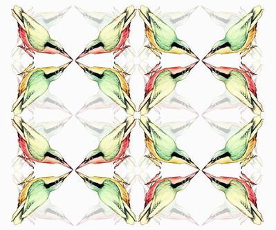 bird-collage8-jpg