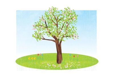spbfc051-spring-tree-v1-2-01-jpg