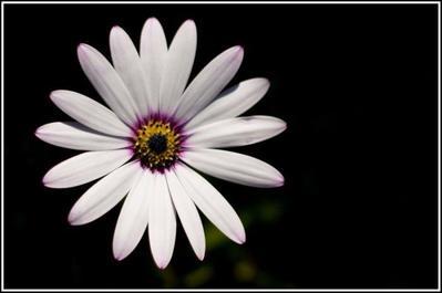 white-flower-jpg-1