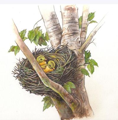 10-nest-jpg