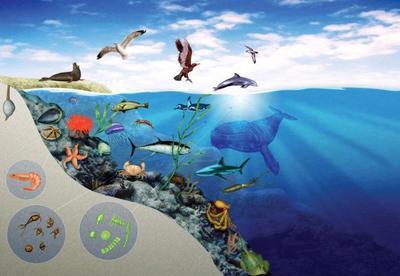 underwatersample1-jpg