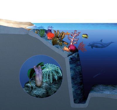 underwatersample2-jpg