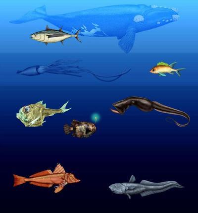 underwatersample3-jpg