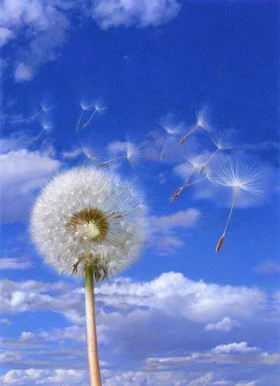 dandelion-clock-jpg