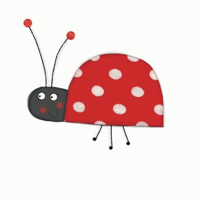 ladybird kts.jpg