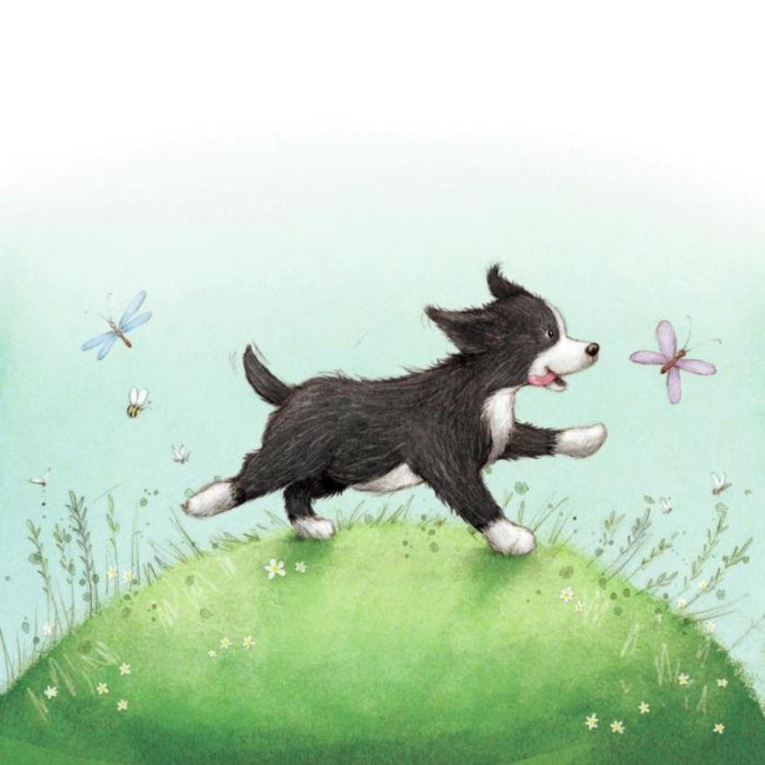 Collie Puppy Dog