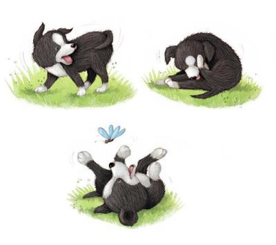 collie-puppy