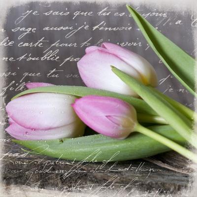 tulip048