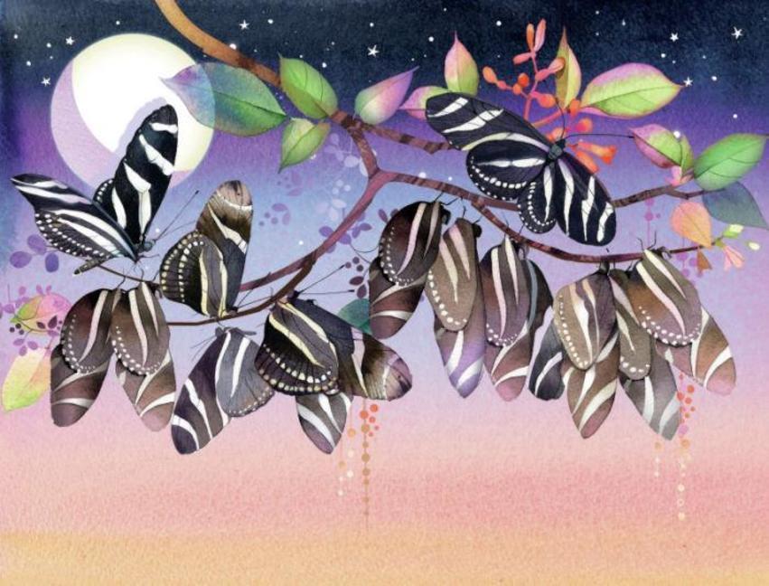 Longwing Butterflies