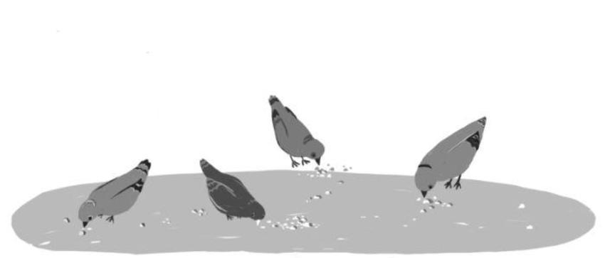 Tr Birds