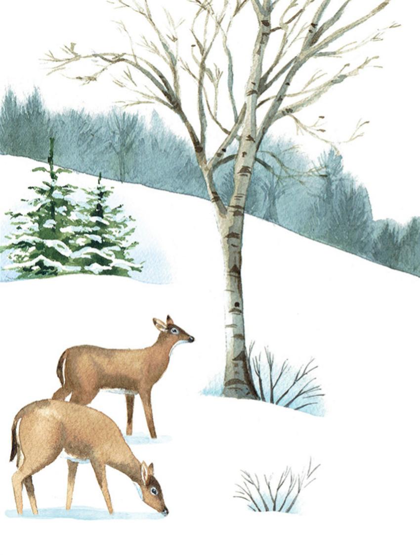 Mikki Butterley Deer.png