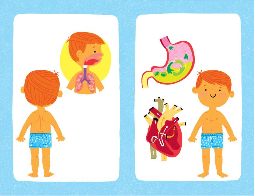 15.HU1_Body Book_3 Lungs_Stomach.jpg