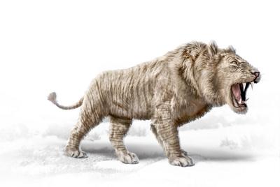 eurasian-cave-lion-mbp-val-2017-final-jpg