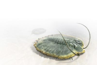 trilobite-mbp-val-2017-final-jpg