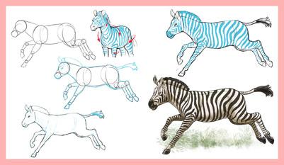 arcturus-howtodrawanimals-spread-02-03-zebra-04-jpg