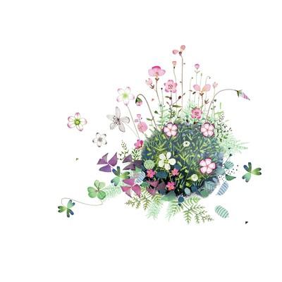 saxifrage-floral-jpg