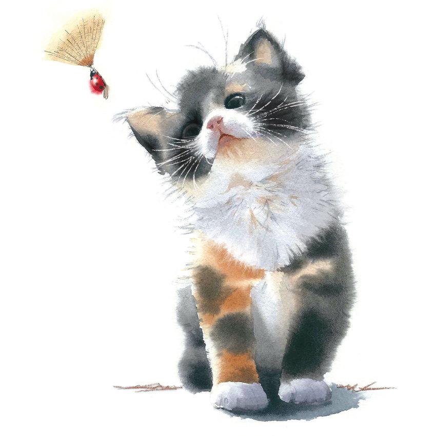 Kitten and ladybird.jpg