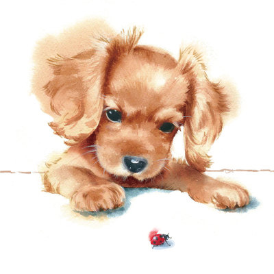 puppy-and-ladybird-jpg