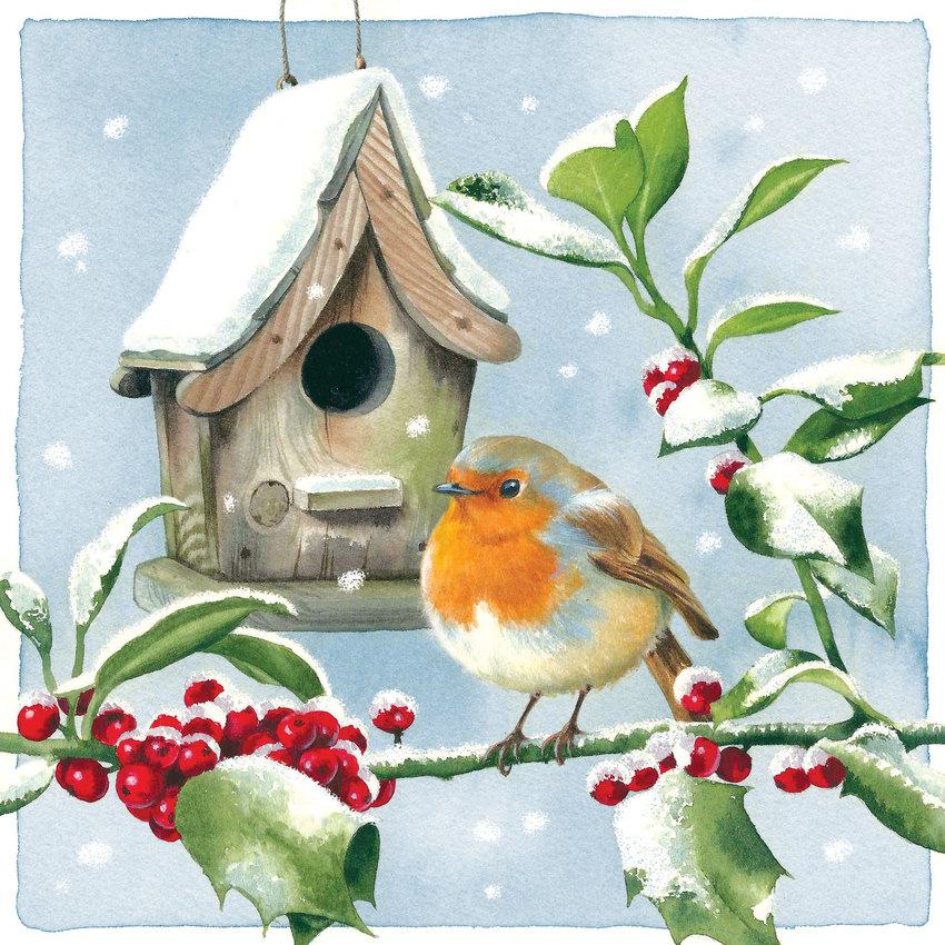 Robin and birdbox.jpg