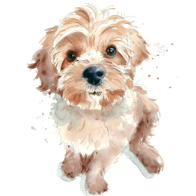 scruffy-puppy-jpg