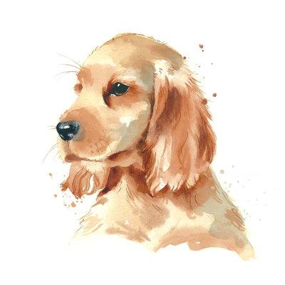 spaniel-puppy-jpg