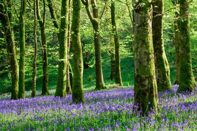 barton-wood-exmoor-4207-jpg