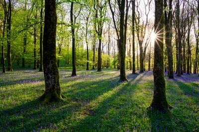 barton-wood-exmoor-4277-jpg