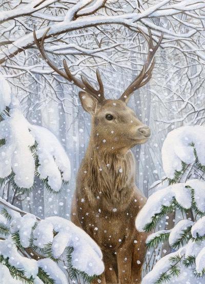 la-winter-stag-deer-jpg
