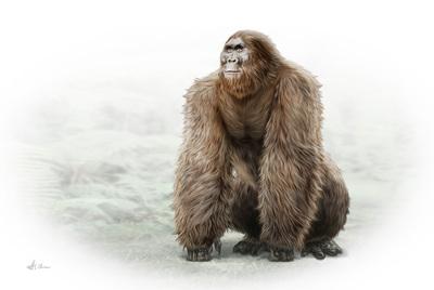 gigantopithecus-mbp-val-2017-final-jpg