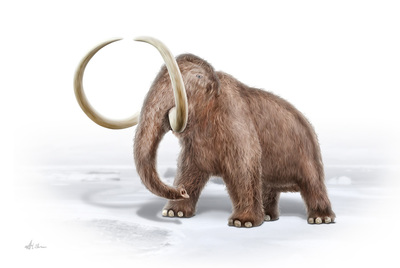 wooly-mammoth-mbp-val-2017-final-jpg