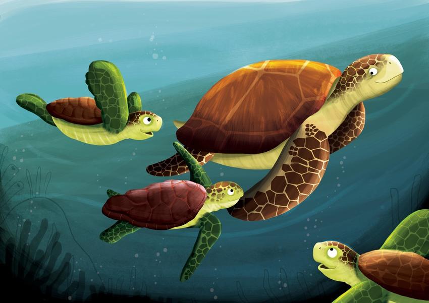 Angelika Scudamore underwater turtle.jpg