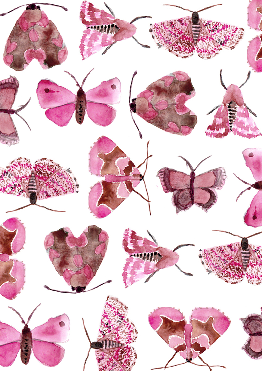 Pink butterflies and moths - Gina Maldonado.jpg