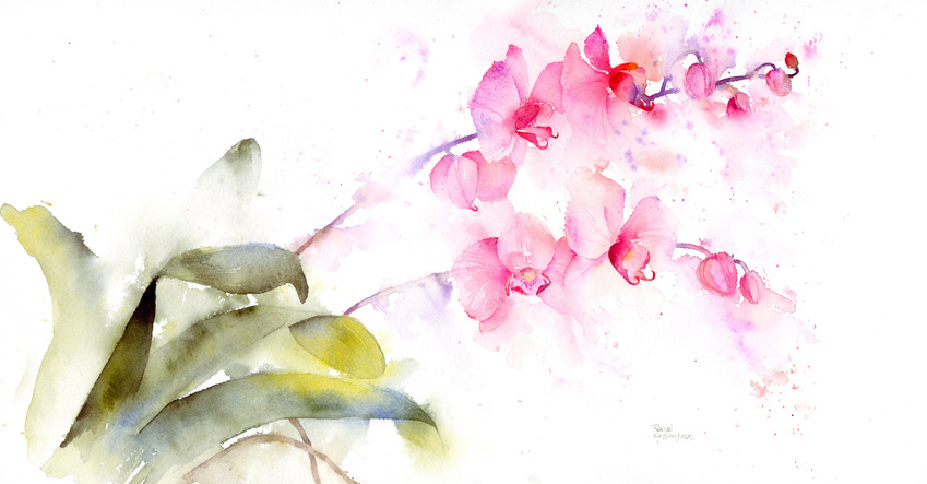 pink orchid.jpg